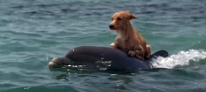 dog-riding-dolphin